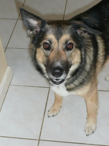 Sydney, our first shelter dog