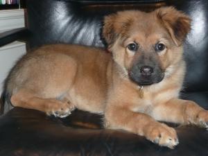 Ka$h, our new shelter dog